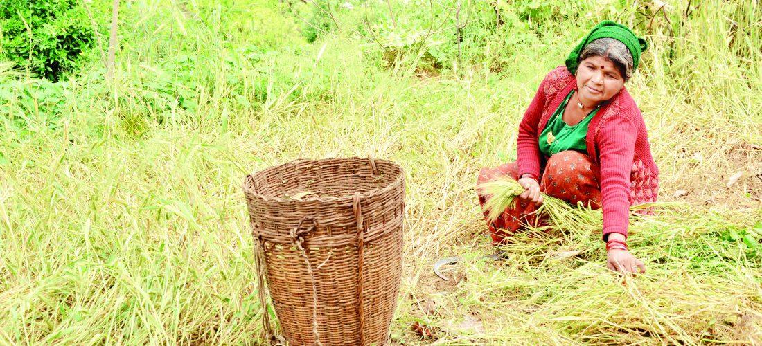 श्रीजन परियोजनाः जैविक खेती से बदल रहे हालात