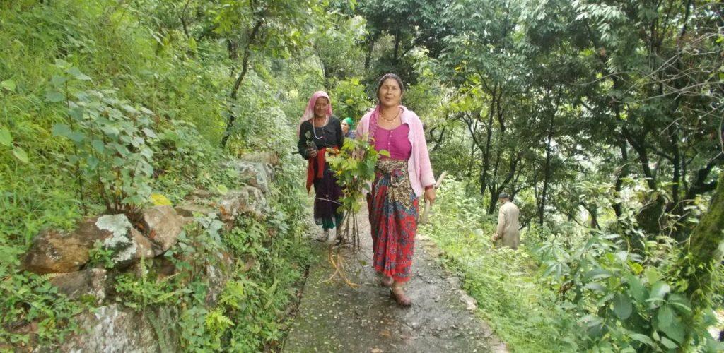 श्रीजन नैपियर ग्रासः अब जंगल जाना मजबूरी नहीं